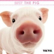 THE PIG ミニカレンダー [2017年カレンダー]