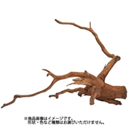 枝流木 インドネシア産 [約200~300mm]