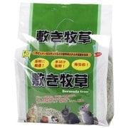 敷き牧草(バミューダグラス)約1kg [小動物用底砂・床材]