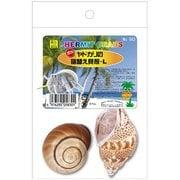 オカヤドカリの宿替え貝殻 L