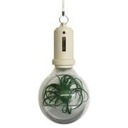 PLB-01 [Pocket Light Bulb-Milk]