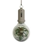 PLB-04 [Pocket Light Bulb-Stone]
