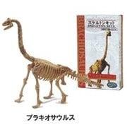 スケルトン・キット ブラキオサウルス