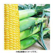 新潟産トウモロコシ 5kg