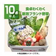 新潟 旬の野菜セット Mサイズ