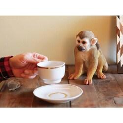 販売 リスザル Animal_Monkeys