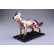107102 犬 解剖モデル [4Dスケール VISION 動物解剖シリーズ]