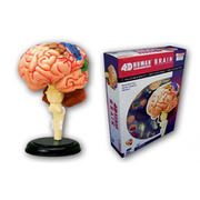 107133 脳解剖モデル [4Dスケール VISION 人体解剖シリーズ]