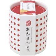 GD-88902 豆絞り盆彩栽培セット 赤松