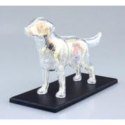 4D VISION 動物解剖12 犬解剖スケルトンモデル [立体パズル]