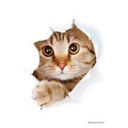 キャラクタースリーブ・ミニ 猫 「呼んだ?」 [トレーディングカード用品]