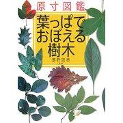 原寸図鑑 葉っぱでおぼえる樹木 [図鑑]