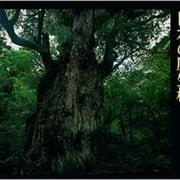 日本の原生林―水越武写真集 [単行本]