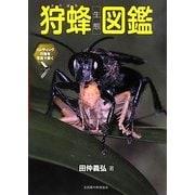 狩蜂生態図鑑―ハンティング行動を写真で解く [図鑑]