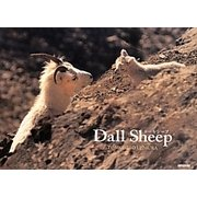 Dall Sheep [単行本]