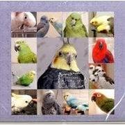 365days…鳥どりカレンダー 2015 [単行本]