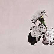 ラブ・イン・ザ・フューチャー スペシャル・エディション