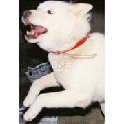 白い犬 [単行本]