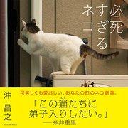 写真集 必死すぎるネコ 激闘篇(仮) (タツミムック) [ムック・その他]