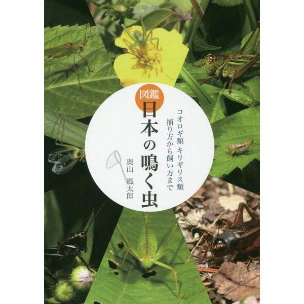 図鑑 日本の鳴く虫―コオロギ類キリギリス類捕り方から飼い方まで [単行本]