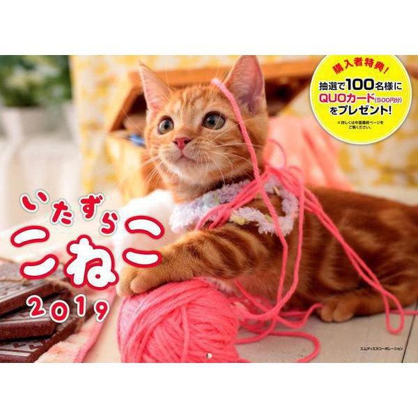 いたずらこねこカレンダー 2019 [単行本]