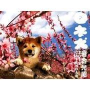 犬カレンダー 日本犬 2019 [単行本]