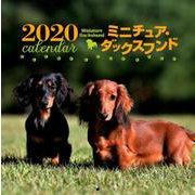 2020年 大判カレンダー ミニチュア・ダックスフンド(カレンダー) [ムックその他]