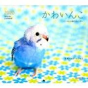 かわいんこ インコと小鳥のカレンダー 2020 [単行本]