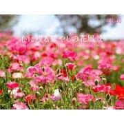 心に残る癒やしの花風景 2020(カレンダー) [単行本]