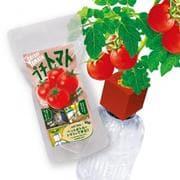 ペットボトル栽培グリーントイ プチトマト [ムックその他]