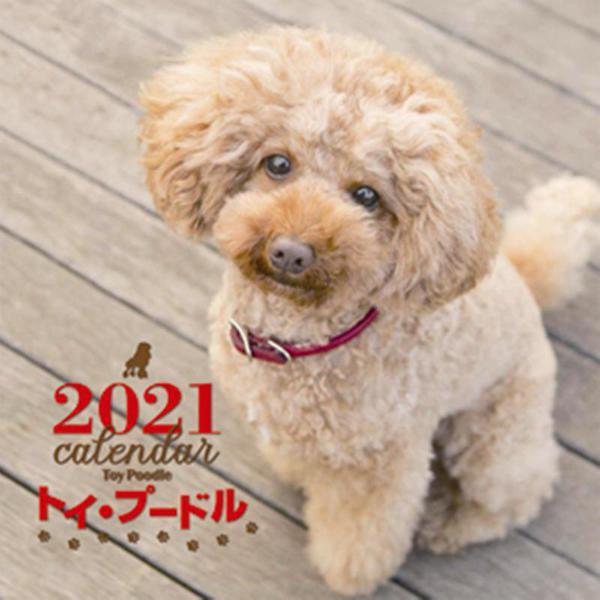 2021年 大判カレンダー トイ・プードル(誠文堂新光社カレンダー) [ムックその他]