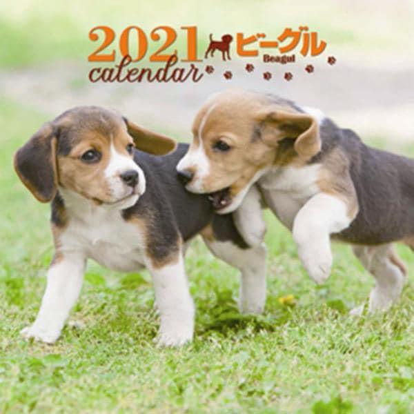 2021年 大判カレンダー ビーグル(誠文堂新光社カレンダー) [ムックその他]