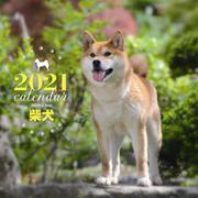 2021年 大判カレンダー 柴犬(誠文堂新光社カレンダー) [ムックその他]