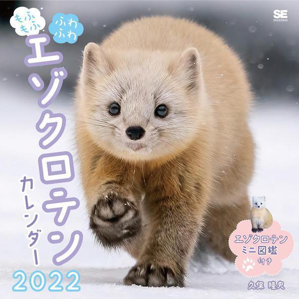 もふもふふわふわエゾクロテン カレンダー 2022(翔泳社カレンダー) [単行本]