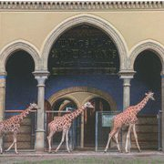 世界の美しい動物園と水族館 [単行本]