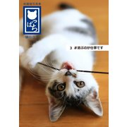 保護猫写真集 ねこっぱち! (3) #遊ぶのが仕事です(アイデア出版) [電子書籍]