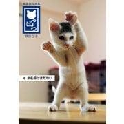 保護猫写真集 ねこっぱち! (4) ♯名前はまだない(アイデア出版) [電子書籍]