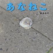 あなねこ(集英社) [電子書籍]